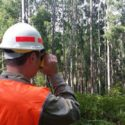 Victorian Government Must Support VicForests & Regulator